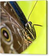Owl Butterfly In Yellow Flower Canvas Print