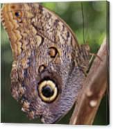 Owl Close Up Canvas Print