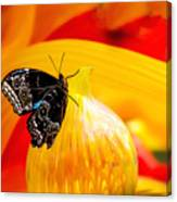 Owl Eye Butterfly on Colorful Glass Canvas Print