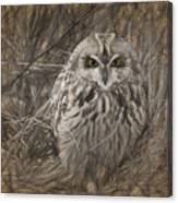 Owl In The Woods Canvas Print