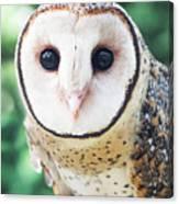 Owl Insight Canvas Print