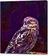 Owl Little Owl Bird Animal  Canvas Print