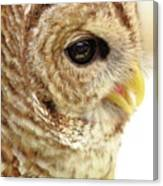 Owl Profile Canvas Print