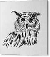 Owl Study 2 Canvas Print