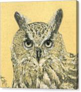 Owl Study Canvas Print