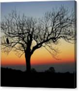 Owl Sunset Canvas Print