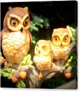 Owl Trio Canvas Print