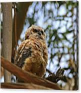 Owlet Lookout Canvas Print