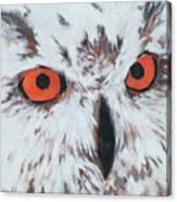 Owlish Eyes Canvas Print