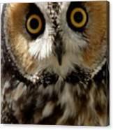 Owl's Eyes Canvas Print