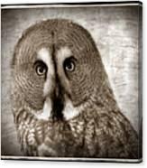 Owls Eyes -vintage Series Canvas Print