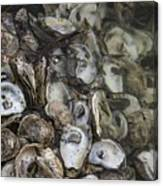 Oysters Four Canvas Print
