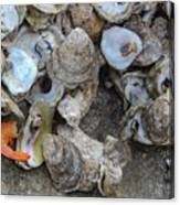 Oysters One Canvas Print