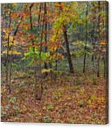 Ozark Forest In Fall 1 Canvas Print
