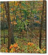 Ozark Forest In Fall 2 Canvas Print