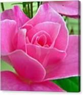 p1050202b  Pink Rose Canvas Print