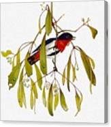 pa TonyOliver AustralianBirds 13 MistletoeBird Tony Oliver Canvas Print