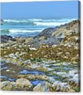 Pacific Coast Tide Pools Canvas Print