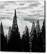 Pacific Pines Canvas Print