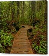 Pacific Rim National Park Boardwalk Canvas Print