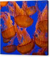Pacific Sea Nettle Cluster 1 Canvas Print