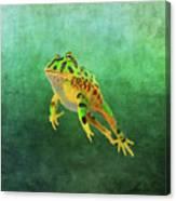 Pacman Frog Canvas Print