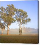 Paddock Sunrise Canvas Print
