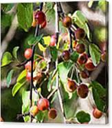 Painted Berries Canvas Print