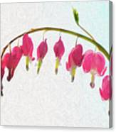 Painted Bleeding Heart Canvas Print