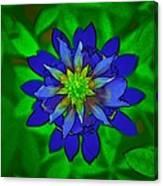 Painted Bluebonnet Canvas Print
