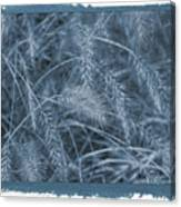 Painted Cyanotype Golden Wheat Canvas Print