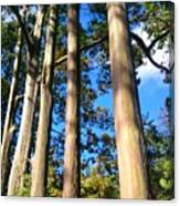 Painted Eucalyptus II Canvas Print