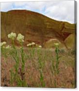 Painted Hills White Wildflowers Canvas Print