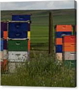 Painted Hives Canvas Print