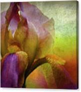 Painted Iris Canvas Print