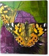 Painted Lady Butterflies Canvas Print