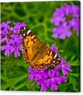 Painted Lady On Purple Verbena Canvas Print