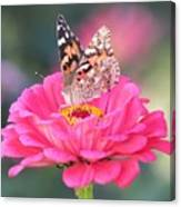 Painted Lady On Red Zinnia 3  Canvas Print