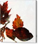 Painted Leaf Series 5 Canvas Print