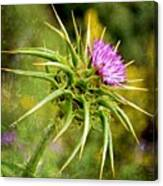 Painted Milk Thistle Canvas Print