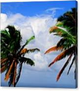 Painted Palm Trees Canvas Print