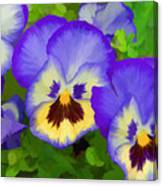 Painterly Pansies Canvas Print