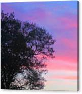 Painted Pink Sky Canvas Print