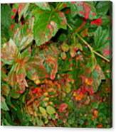 Painted Plants Canvas Print