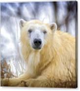 Painted Polar Bear  Canvas Print