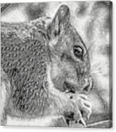 Painted Squirrel Canvas Print