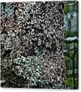 Painted Treebark Woodcut Canvas Print