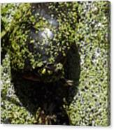Painted Turtle Camouflague Canvas Print