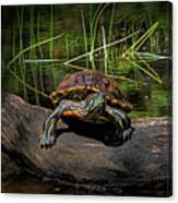 Painted Turtle Sunning Itself On A Log Canvas Print