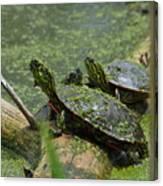 Painted Turtles Canvas Print